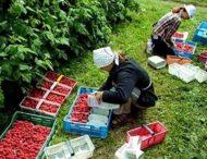 Украинцы заменили на рынке труда 2 млн поляков-эмигрантов — Bloomberg