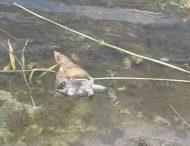 Под Днепром массово гибнут черепахи: местные жители бьют тревогу (Фото)