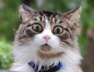 Заммэра Днепра заплатит 31 тыс. грн. тому, кто найдет живодера, отрезавшего лапы котам.