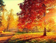 Осень — время не болеть. Советы для тех, кто хочет быть здоровым