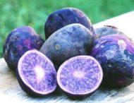 Украинские селекционеры вывели новые сорта цветного картофеля