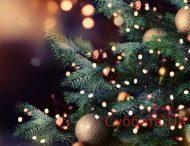 """В Запорожье """"сдался"""" еще один человек и выкинул новогоднюю ёлку"""
