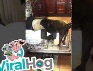 Собака решила, что посудомоечная машина сама не справится с грязными тарелками