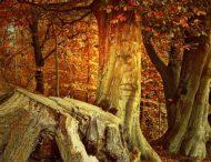 На Дніпропетровщині виявили лісового браконьєра (Фото)