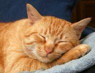 Наплевать на правила: Рыжий кот показал, кто в доме хозяин