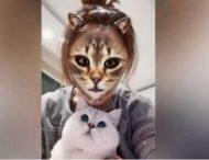 Кошки с ужасом отреагировали на хозяев в кошачьем обличье: в сеть выложили смешное видео