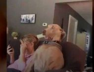 Необычная реакция собаки на пятницу 13-ое стала хитом в сети