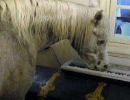 Лошадь выселила фермера из дома и стала звездой сети