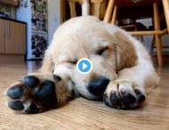 У пользователей соцсетей новое увлечение — собачьи ноги