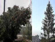 Британцы обижаются на норвежцев из-за рождественской елки