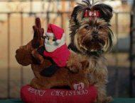 Смешная собака в костюме Деда Мороза стала звездой интернета: курьезное видео