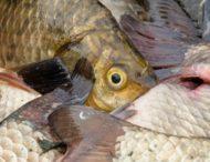 З квітня на Дніпропетровщині у браконьєрів вилучили 4785 кг риби