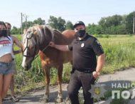 На Дніпропетровщині розшукували Ультраса