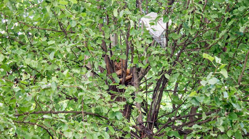 На Дніпропетровщині знову рятували рудого пухнастика (Фото)