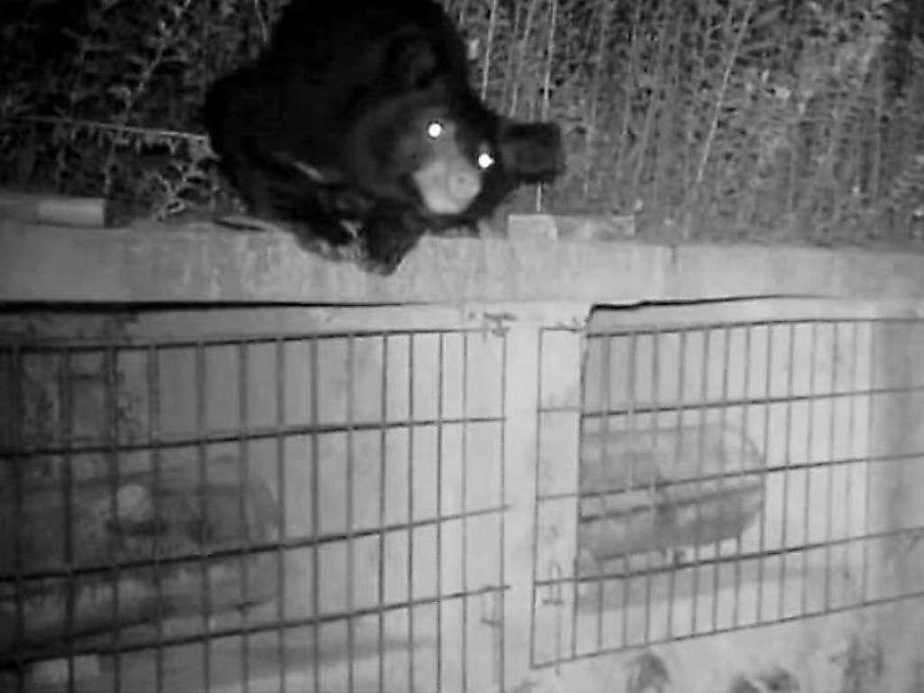 Медведь украл мед на пасеке