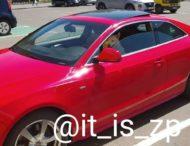 Пес уверенно восседал за рулем Audi