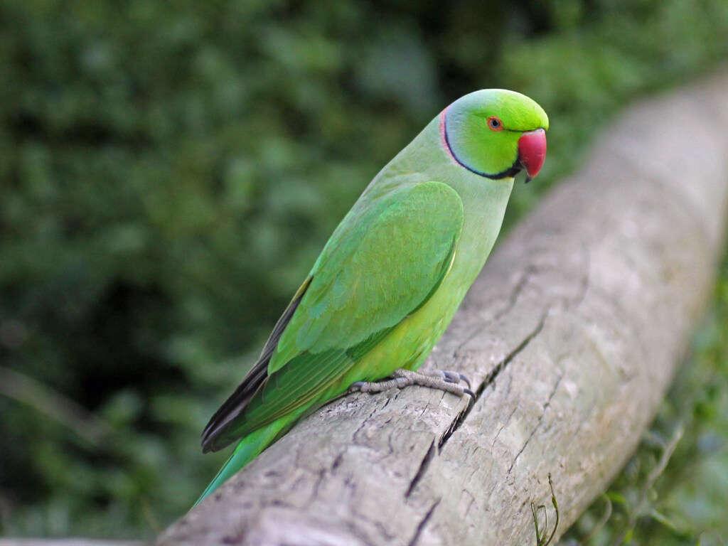 Попугай подглядывал за хозяйкой в душе
