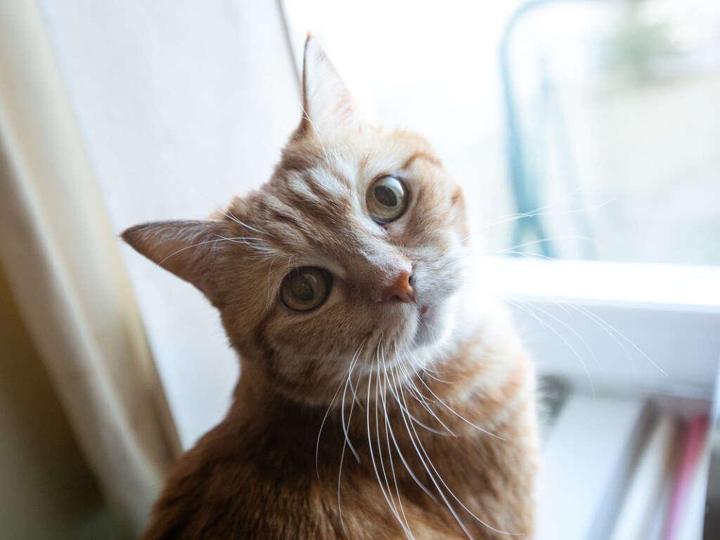 Кошка нежно прижалась к хозяину и с обожанием на него посмотрела