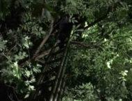 На Дніпропетровщині знімали з дерева незвичного домашнього улюбленця (Фото)