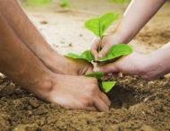 На Дніпропетровщині масово висаджуватимуть дерева