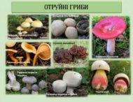 Як запобігти отруєнню грибами