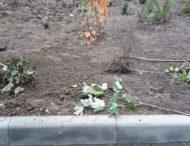 На Дніпропетровщині вандали знищили молоді дерева (Фото)
