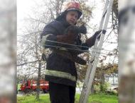На Дніпропетровщині рятували вусанів (Фото)