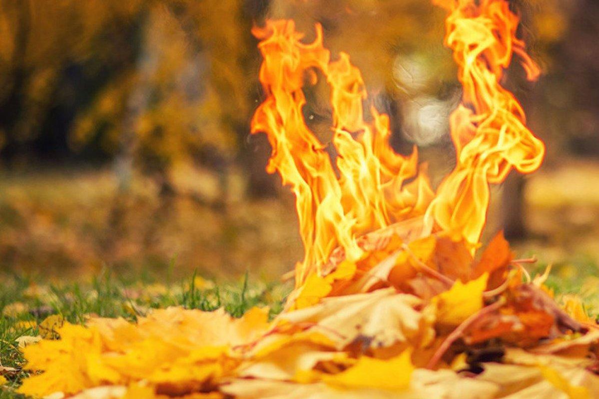 Побачили вогнище з опалого листя – викликайте поліцію