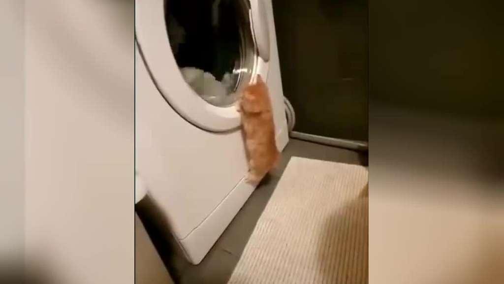 Крутящийся барабан стиральной машины загипнотизировал котёнка