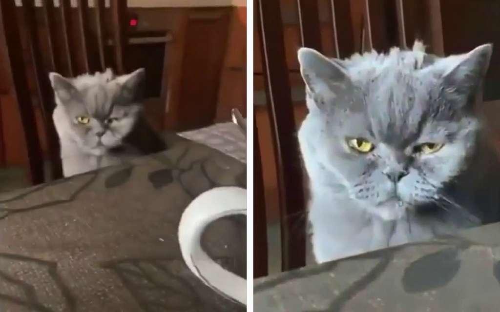Сеть позабавил хмурый заспанный кот