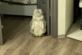 Кошка-ниндзя стала в бойцовскую позу
