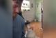 Кошку очаровало выступление хозяина
