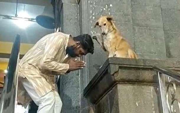 Собака «благословляет» людей в храме Мумбаи