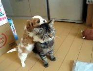 Назойливый щенок не смог вывести из себя терпеливого кота