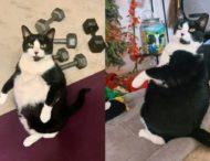 Кошка поразила своим сходством с пингвином