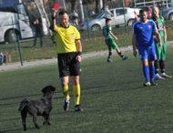Арбитр показал красную карточку собаке