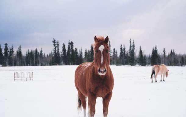 Коммунальщик к уборке снега привлек коня