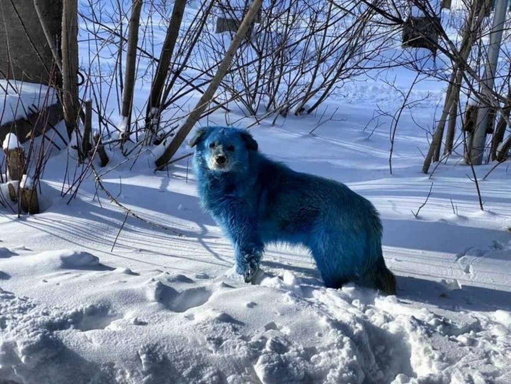 В России замечены синие собаки
