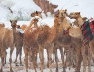 Снег окутал песчаные дюны Сахары