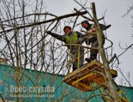 До 1 квітня у Нікополі проведуть роботи по обрізці дерев