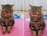 Кот удивил реакцией на пение хозяйки