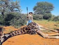 Женщина убила жирафа и показала его сердце