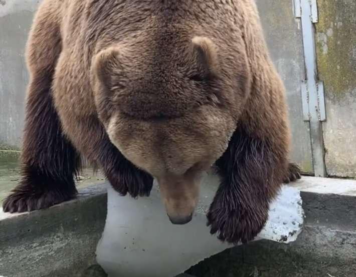 Медведь принял участие в субботнике в зоопарке