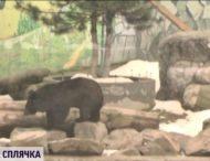 В зоопарке в Виннице медведица впала в спячку впервые за 15 лет