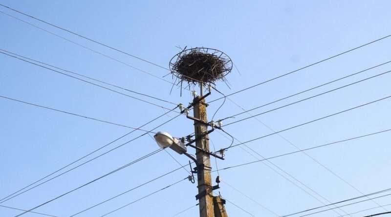 Птиц изучай – смартфон получай: ДТЭК Днепровские электросети наградил победителей областного конкурса «Лелека»