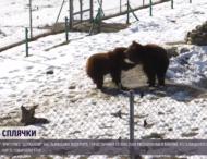 Медведи удивили реакцией на снег