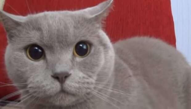 Сеть рассмешило видео, как «банда кошек» окружила пса
