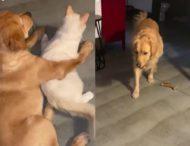 «Попались за обнимашками»: кота застали в объятиях пса