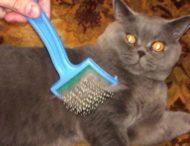Злой кот рассмешил сеть реакцией на чесалку