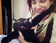 Далеко не все коты любят объятия